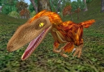 Feathers Velociraptor